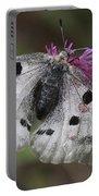 Mountain Apollo Parnassius Apollo Portable Battery Charger by Amos Dor
