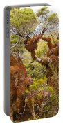Mountain Beech Rain Forest In Fjordland Np Nz Portable Battery Charger