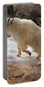 Mountain Goat On Snowfield On Mount Evans Portable Battery Charger