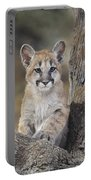Mountain Lion Cub Portable Battery Charger