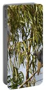 Mourning Doves Landing In Eucalyptus  Portable Battery Charger