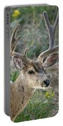 Mule Deer Buck In Velvet Portable Battery Charger