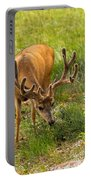 Mule Deer In Beaver Meadows In Rocky Mountain National Park Portable Battery Charger