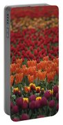 Multi-colored Tulip Fields  Portable Battery Charger