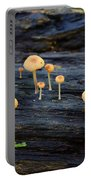 Mushrooms Amazon Jungle Brazil 4 Portable Battery Charger