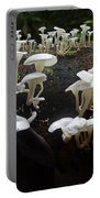 Mushrooms Amazon Jungle Brazil 5 Portable Battery Charger
