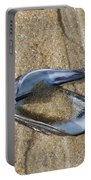 Mussel Shell On The Beach Portable Battery Charger