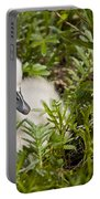 Mute Swan Pictures 210 Portable Battery Charger