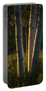 Natures Glow Portable Battery Charger