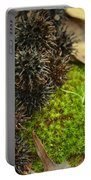 Nature's Moss And Sweetgum Pods Portable Battery Charger