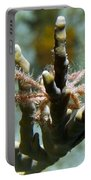 Neck Crab - Macro Undersea Reef Life Portable Battery Charger