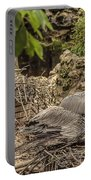 Nesting Brown Pelicans Portable Battery Charger