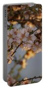 New Blossoms - Old Almond Tree Portable Battery Charger