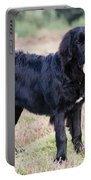 Newfoundland Dog Portable Battery Charger