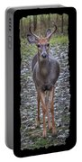 Curious Yearling Deer Portable Battery Charger