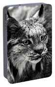 North American Lynx In The Wild. Portable Battery Charger