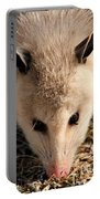 North American Opossum In Winter Portable Battery Charger