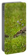 Northern Flicker Pictures 42 Portable Battery Charger