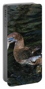 Northern Gannet Feeding Portable Battery Charger