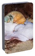 Northern Moon Snail Portable Battery Charger
