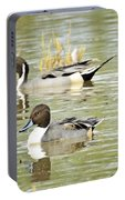 Northern Pintail Ducks  Portable Battery Charger