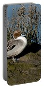 Northern Pintail Pair At Rest Portable Battery Charger