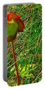 Northern Pitcher Plant In French Mountain Bog In Cape Breton Highlands-nova Scotia  Portable Battery Charger