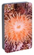 Northern Red Anemone Portable Battery Charger