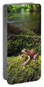 Northern Red-legged Frog Portable Battery Charger