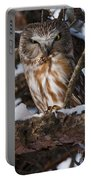 Northern Saw-whet Owl.. Portable Battery Charger