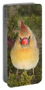 Not-so-angry Bird Portable Battery Charger