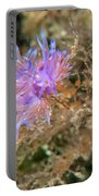 Nudibranch 2 Portable Battery Charger