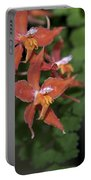Odontioda Red Riding Hood Macro  8710 Portable Battery Charger