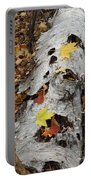 Old Fallen Birch Portable Battery Charger