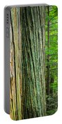 Old Growth Cedars Glacier National Park Portable Battery Charger