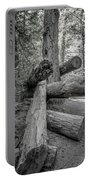 Old Growth Forest Black And White Collection 4 Portable Battery Charger