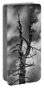 Old Trees Reach For The Sky Portable Battery Charger