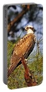Opulent Osprey Portable Battery Charger by Al Powell Photography USA