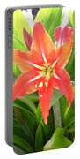 Orange Amaryllis Flower Blooms In Springtime Portable Battery Charger