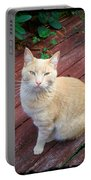 Orange Tabby On Porch Portable Battery Charger