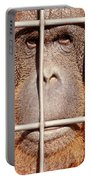 Orangutan Face Watching From Behind Steel Bars Portable Battery Charger