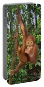 Orangutan  Portable Battery Charger by Frans Lanting MINT Images