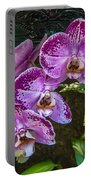 Orchid Flowers Growing Through Old Wooden Picture Frame Portable Battery Charger