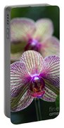 Orchid One Portable Battery Charger