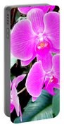 Orchid Series 1 Portable Battery Charger