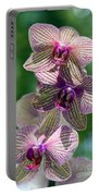 Orchid Two Portable Battery Charger