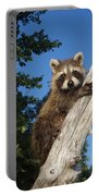 Orphaned Raccoon Portable Battery Charger