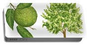 Osage Orange Tree Portable Battery Charger