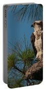 Osprey In Pine 2 Portable Battery Charger