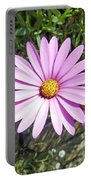 Osteospermum - African Daisy - Pink Portable Battery Charger